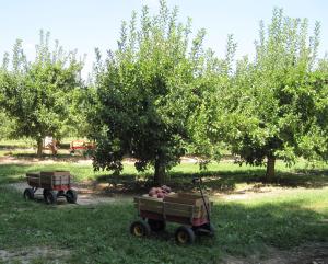 pickin-apples-wagon-orchard-lg